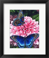 Framed Red Spotted Purple Butterfly