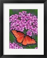 Framed Queen Butterfly