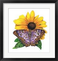 Framed White Peacock Butterfly-II