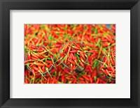 Framed Hot Chili, Semporna, Borneo, Malaysia
