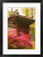 Framed Azaleas, The Deoksugung Palace Complex, Seoul, South Korea