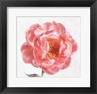 Framed Floret V
