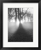 Framed Morning Light