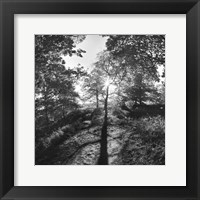 Framed Woodland Tones I