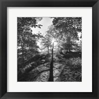 Framed Woodland Tones I