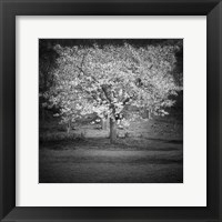Framed Woodland Tones II