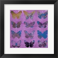 Framed Butterflies on Magenta