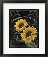 Small Botanical Collection II Framed Print