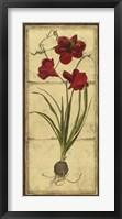 Amaryllis Panel I Framed Print