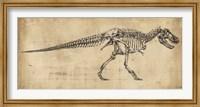 Framed Tyrannosaurus Rex Study