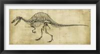 Framed Spinosaurus Study