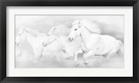 Framed All the White Horses