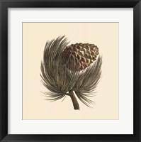 Framed Pignon Pine