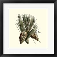 Framed Bordeaux Pine