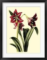 Framed Royal Botanical Study I