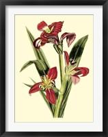 Framed Royal Botanical Study II