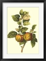Framed Bessa Apple