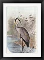 Framed Oversize Common Heron