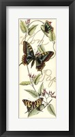 Butterfly Flight I Framed Print