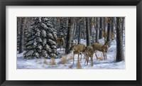 Winter Gathering Framed Print