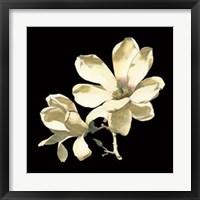 Framed Midnight Magnolias I