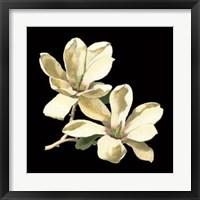 Framed Midnight Magnolias II