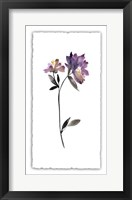 Framed Floral Watercolor III