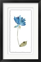 Framed Floral Watercolor VI