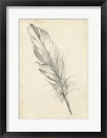 Framed Feather Sketch III