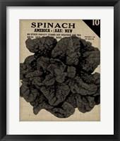 Vintage Seed Pack VI Framed Print