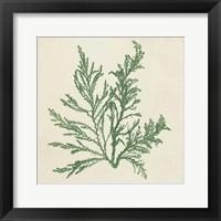 Framed Chromatic Seaweed I