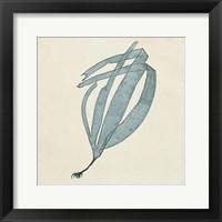 Framed Chromatic Seaweed II