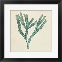 Framed Chromatic Seaweed III