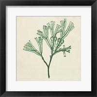 Framed Chromatic Seaweed IV