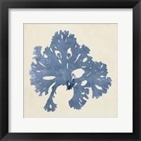 Framed Chromatic Seaweed V