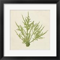 Framed Chromatic Seaweed VII
