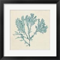 Framed Chromatic Seaweed VIII