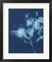 Framed Cyanotype No.3