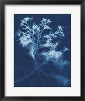 Framed Cyanotype No.4