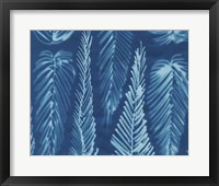 Framed Cyanotype No.8