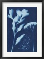 Framed Cyanotype No.15