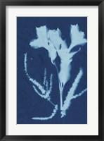 Framed Cyanotype No.17