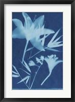 Framed Cyanotype No.18