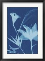 Framed Cyanotype No.19