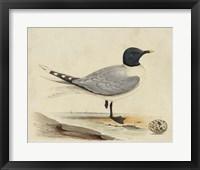 Framed Meyer Shorebirds I