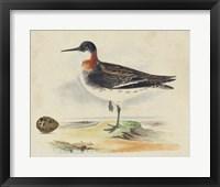 Framed Meyer Shorebirds II
