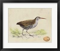 Framed Meyer Shorebirds III