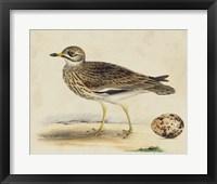 Framed Meyer Shorebirds IV