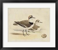 Framed Meyer Shorebirds V