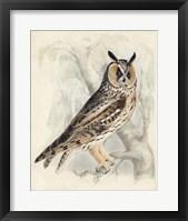 Framed Meyer Long-Eared Owl